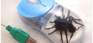tarantula-mouse