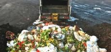 desperdicio-organico